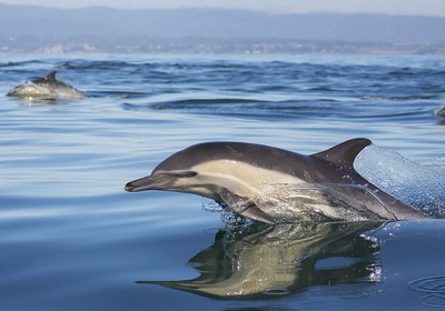 5 Tips for Cruising with Dolphins