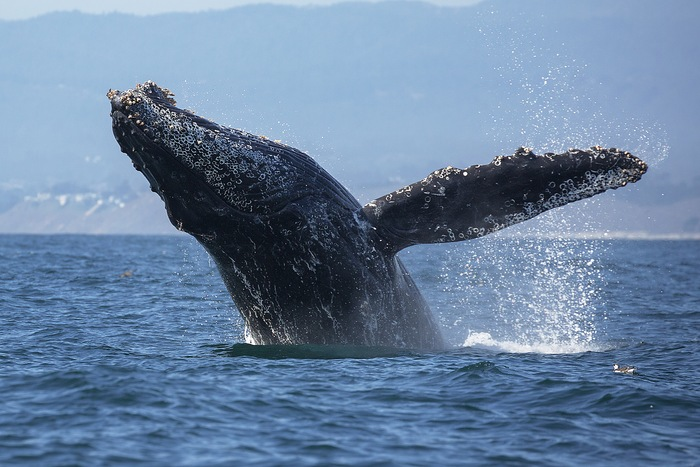 A Splashing Adventure: Where to See Whales This Boating Season