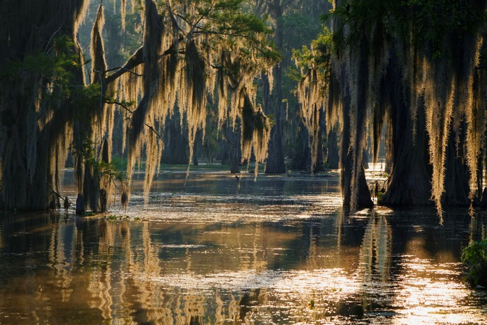 Our Guide to Boating the Bayou